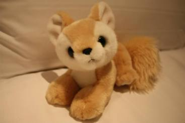 女兒給這萌可愛得不得了的小狐獵了芳心。