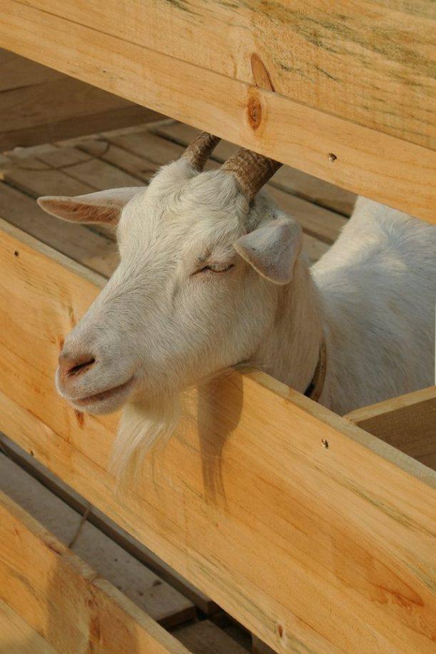 展會為一眾喜羊羊建了新居,整齊乾淨;看喜羊羊多享受!