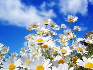 Summer-Flowers-Best-Desktop-Backgrounds-300x225